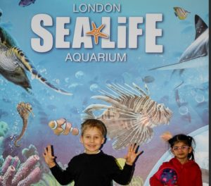 children k-rate London sealife aquarium Kidrated Top 15 Family Days Out For Animal Lovers