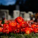 tiny lego pumpkin pile