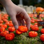 world's smallest pumpkins at legoland miniland lego