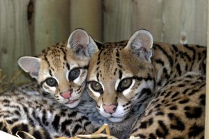 Marwell zoo Kidrated Top 15 Family Days Out For Animal Lovers