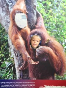London Zoo KidRated review Gorilla Kingdom Top 10 Things To Do In Regents Park Kidrated