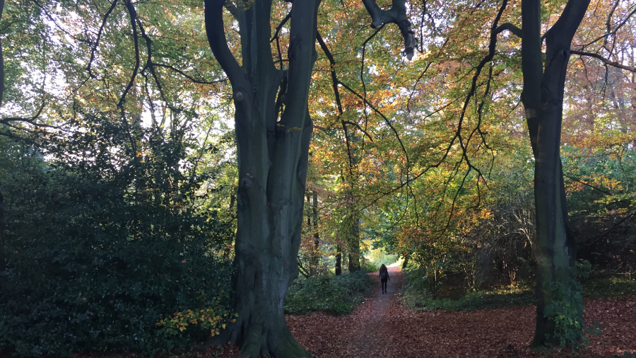 Kenwood House Hampstead Heath Autumn KidRated Family Days Out