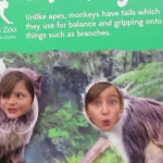 Twycross Zoo, Leiceistershire, zoo, animals, days out with kids, reviews by kids for you, kidrated, family