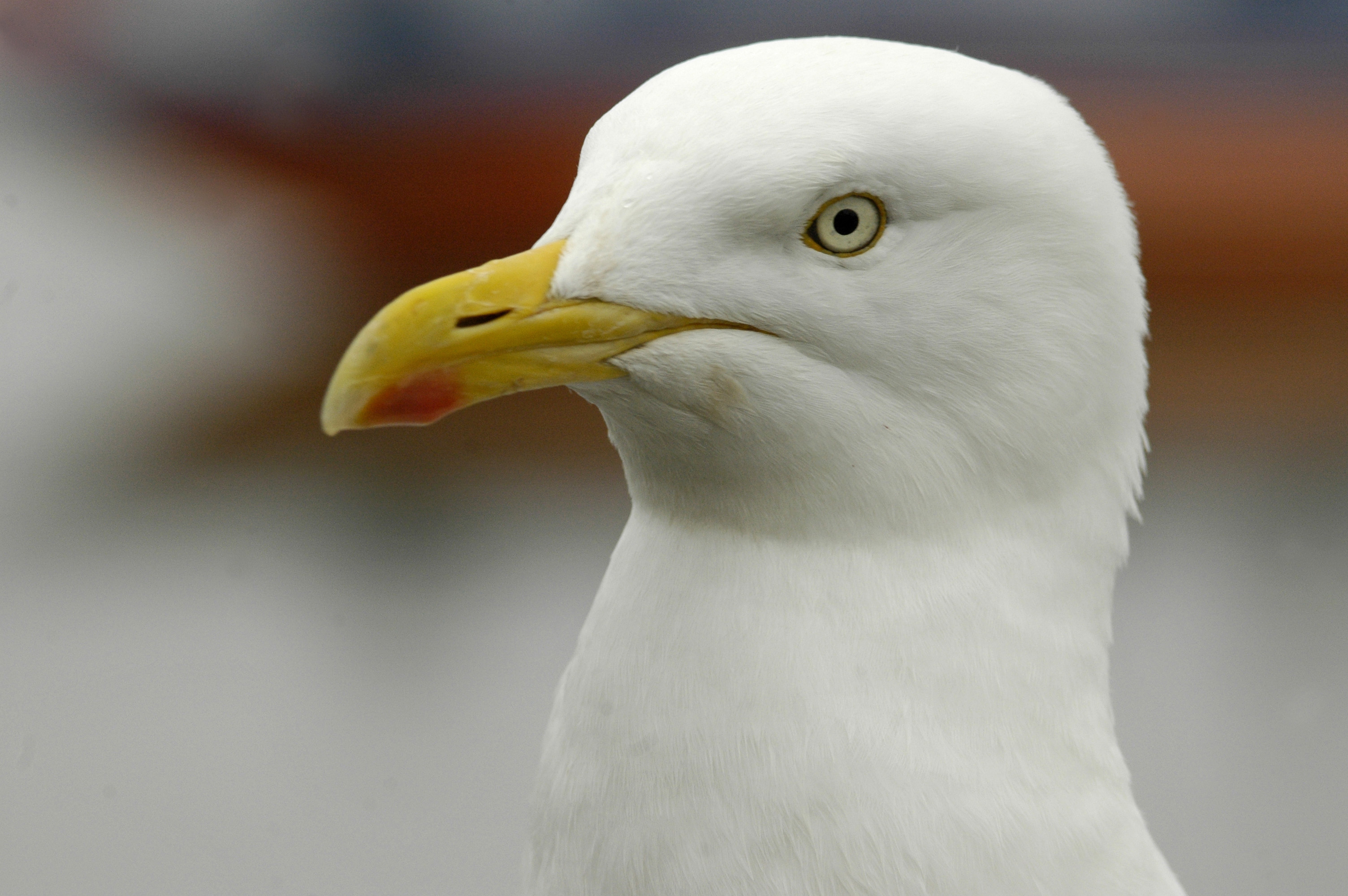 KidRated News - pigeons attack seagul in Hyde Park