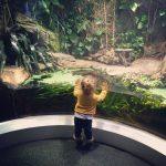 Horniman museum and gardens london