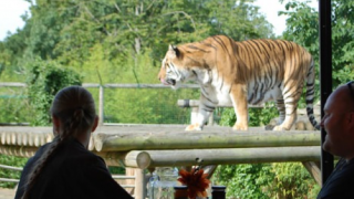 Paradise Wildlife Park: Breakfast with the Big Cats 2 for 1 deal