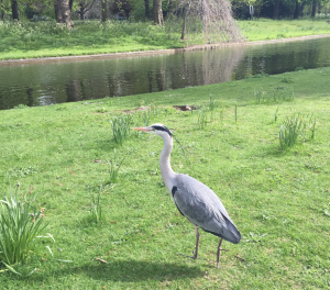 Regent's Park Heron Top 10 Things To Do In Regents Park Kidrated