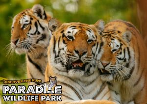 Paradise wildlife park Kidrated Top 15 Family Days Out For Animal Lovers