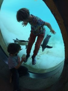 jason solomon's sons with penguins at london zoo kidrated