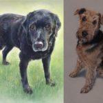 Fenella Willis - Dog Portraits - Remy and Milo