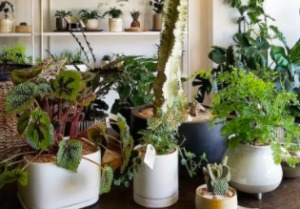 a selection of indoor plants for a bedroom