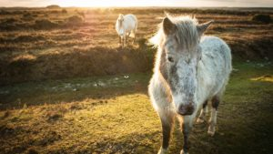 Wild Pony spotted down the Emery Down Trail, The New Forest